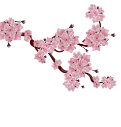 Lush japanese cherry tree the branch pink vector