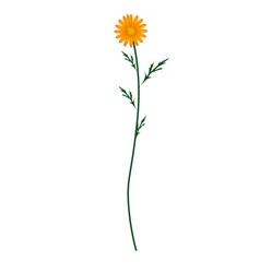 Orange Daisy Blossom on A White Background vector