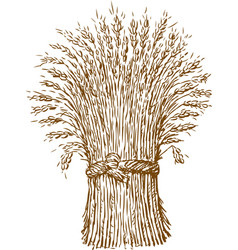 Sheaf wheat vector