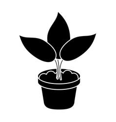 pot plant garden concept pictogram vector image