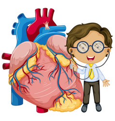 Human heart with a doctor cartoon character vector