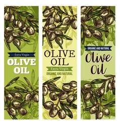 olive oil label with green fruit and leaf sketch vector image