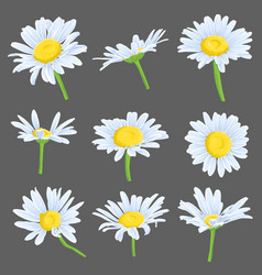 Set drawing daisy flowers vector
