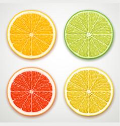 citrus slices vector image