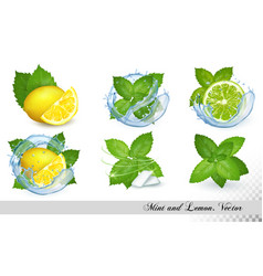 collection fresh mint and melissa leaves with vector image