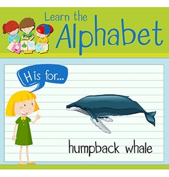Flashcard letter h is for humpback whale vector