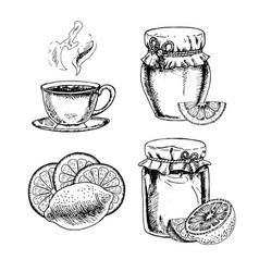 hand drawn set of honey lemon and tea vector image