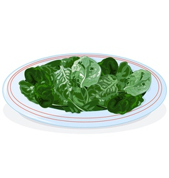 Plate spinach vector