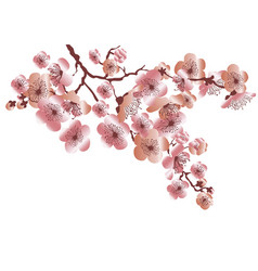 rose gold color sakura blossom bunch vector image