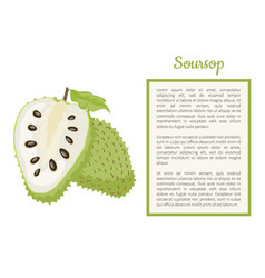 Soursop whole and cut fruit frame text poster vector