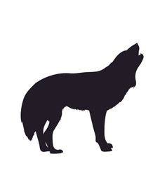 wolf howls image silhouette vector image