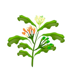 Fresh Clove Plant on A White Background vector image vector image
