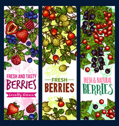 Berry branch sketch banner of wild and farm fruit vector