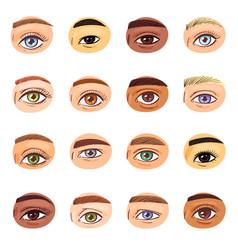 eye human eyesight vision beauty female vector image