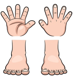 Hands and Feet vector image