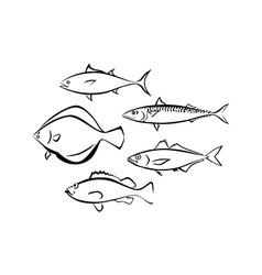 Sea Fish on White Background vector image