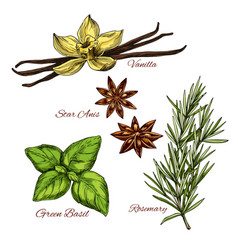 Sketch icons of vecor spices and herbal flavorings vector