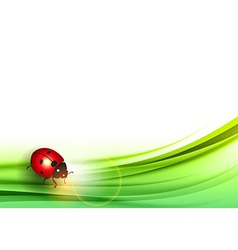 ladybird on green vector image vector image