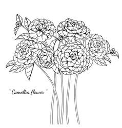 camellia flower and leaf hand drawn botanical vector image