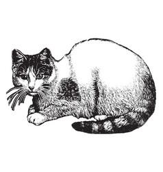 cat vintage vector image