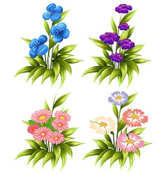 Four sets blooming flowers vector