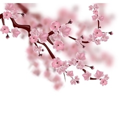 Japanese cherry tree a branch of pink sakura vector