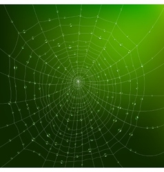 Spider Web With Drops vector