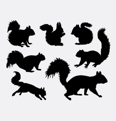 Squirrel animal silhouettes vector image
