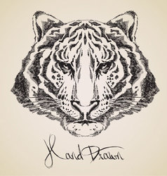 tiger sketch vector image