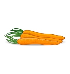 Freshness carrots over white background vector image vector image