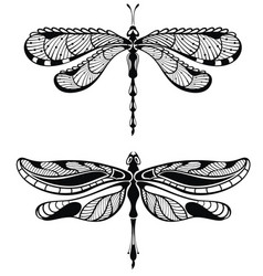 set of dragonfly vector image