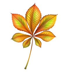 A plant with many leaves vector