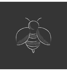 Bee Drawn in chalk icon vector