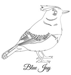 Blue jay bird coloring vector
