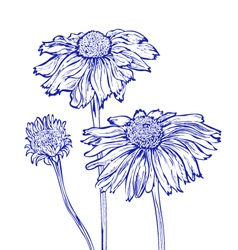 flower marguerite vector image