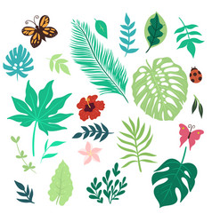 set tropical leaves and flowers isolated vector image