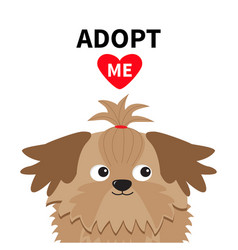 Adopt me dont buy shih tzu dog head inside opened vector
