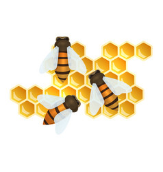 Bees and honey combs vector