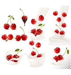 Set of ripe sweet cherries with leaves and splash vector