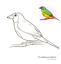 Pin tailed parrotfinch bird coloring book vector image