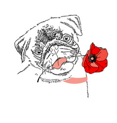 dog with red poppy flower cute pug portrait vector image