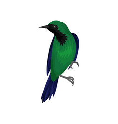 exotic bird with bright green and dark blue vector image