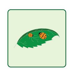 ladybird on leaf ladybug on white vector image