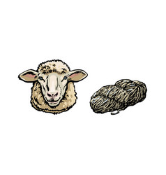 Sketch cartoon sheep head cutted wool set vector
