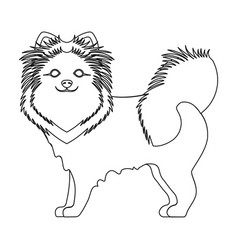 spitz single icon in outline stylespitz vector image