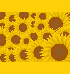 Sun flower abstract background vector image