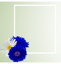 Template card with cornflower and camomile vector image