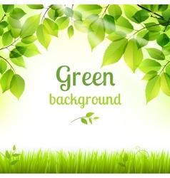 Natural green fresh foliage background vector image