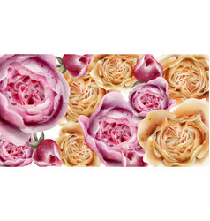 colorful roses background watercolor purple and vector image