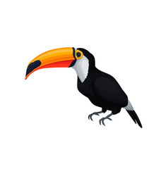 detailed icon of toucan exotic bird with vector image